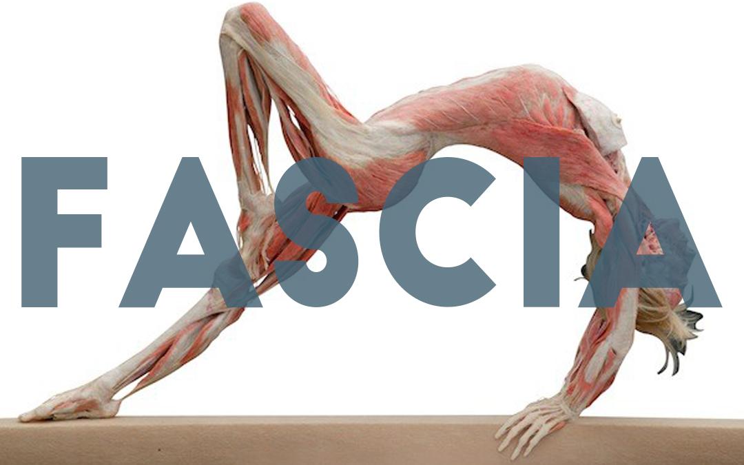 Hogyan őrizd meg a fascia egészségét?